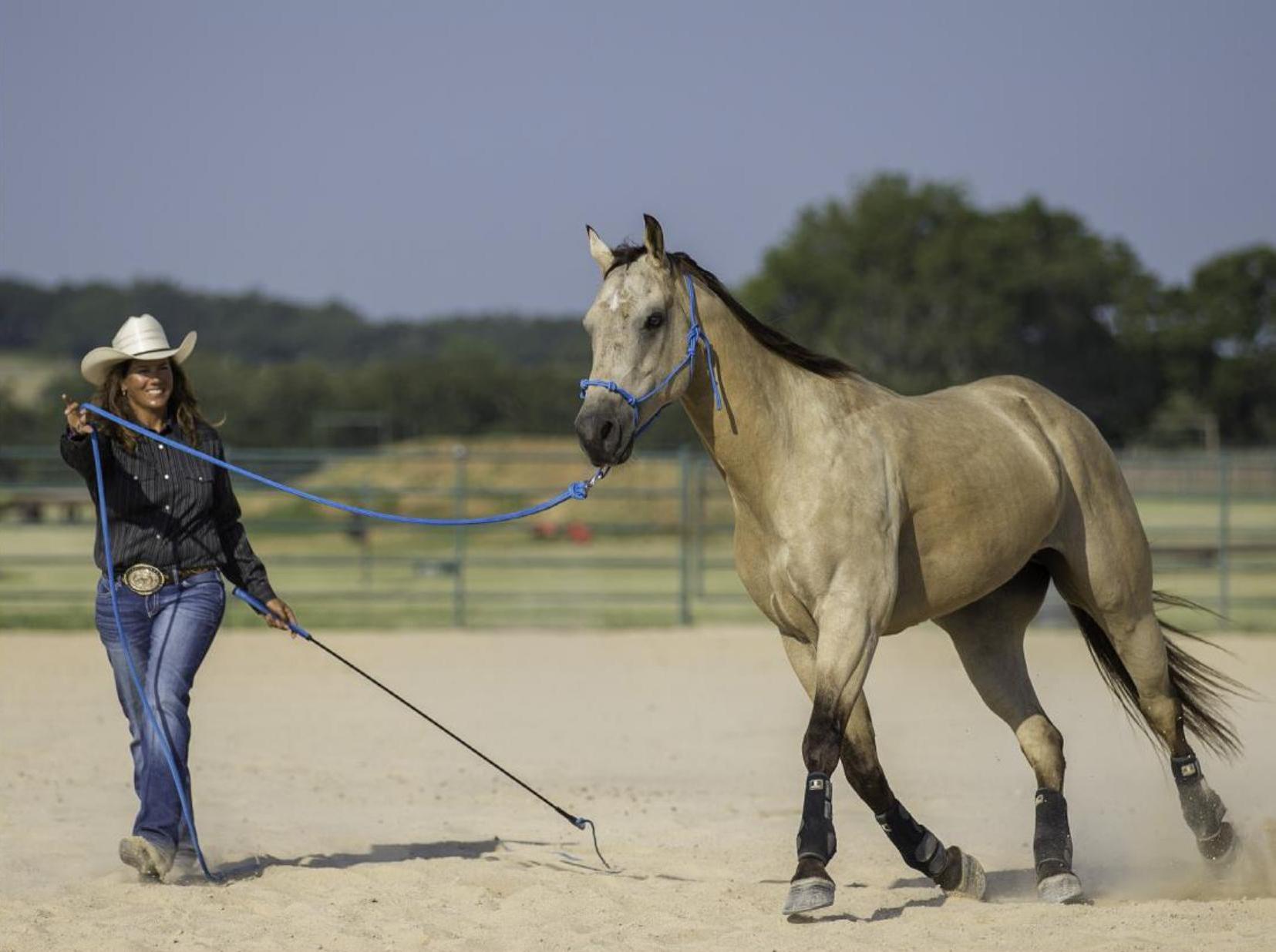 Horse Fundamentals